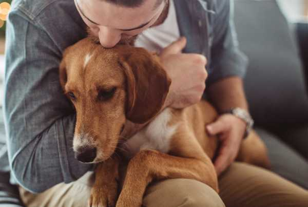 The surprisingly weak scientific case for emotional support animals