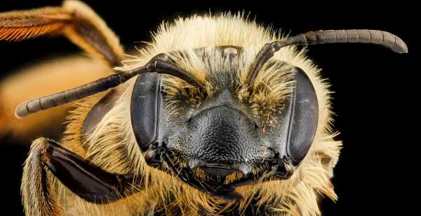 Study: honey bees understand nothing