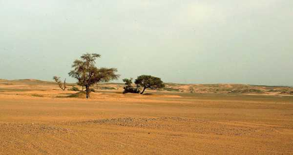 Life Amid the Sands: Millions of Trees Spotted Dotting West African Desert Via High-Tech Survey